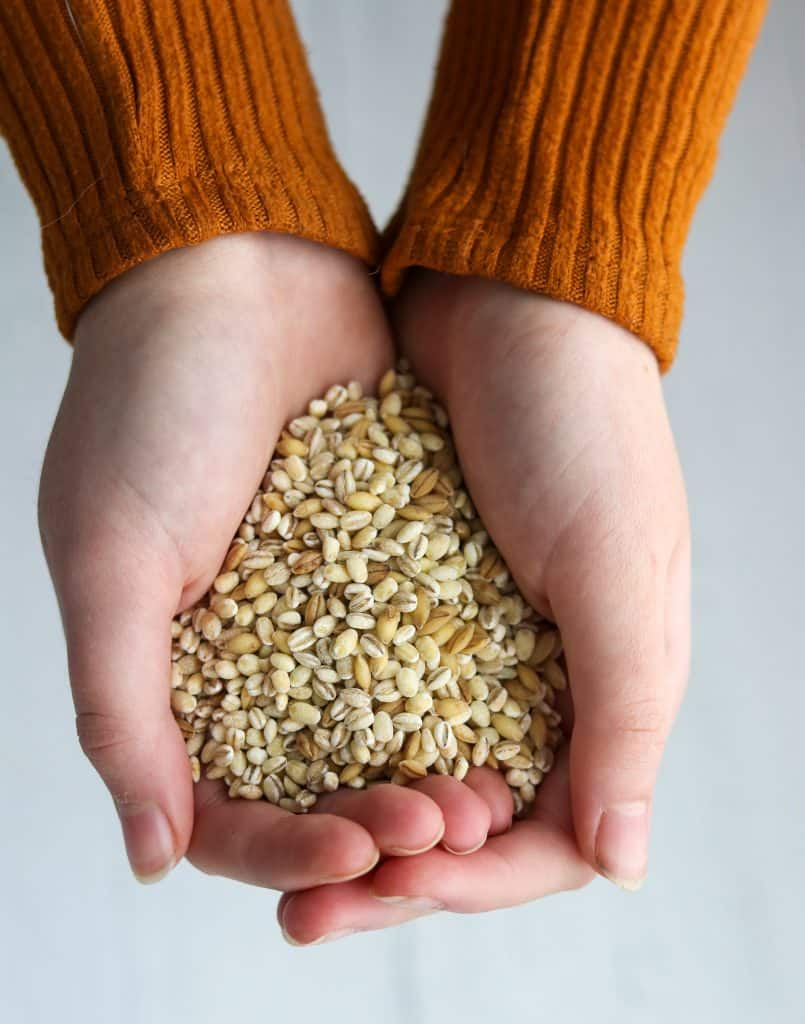Hands holding dry barley grains