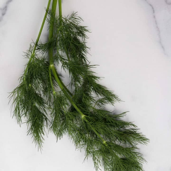 Sprig of dill on a marble surface.